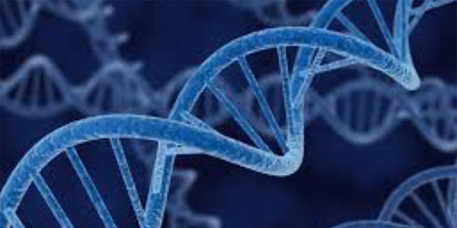 Telomeres and Aging - Telomeres are the protective caps on the ends of the strands of DNA called chromosomes